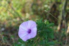 Uma flor roxa imagens de stock royalty free