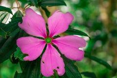 Uma flor roxa bonita foto de stock royalty free