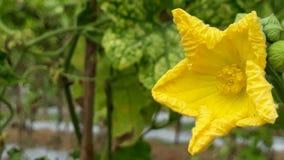 Uma flor vegetal Foto de Stock Royalty Free