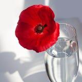 Uma flor vermelha grande da papoila na tabela branca com luz e sombras do sol do contraste e no vidro de vinho com opinião superi foto de stock royalty free
