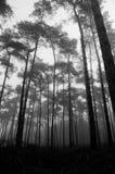 Uma floresta Imagens de Stock Royalty Free