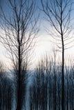 Uma floresta Imagem de Stock