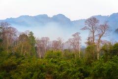 Uma floresta fotografia de stock