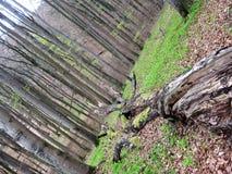 Uma floresta Fotos de Stock Royalty Free