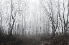 Uma floresta assustador de árvores de vidoeiro em um dia de invernos nevoento com um frio, abafado edite foto de stock royalty free