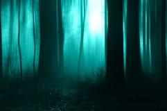 Uma floresta assustador em um dia enevoado no inverno Com um verde borrado, azul, assustador edite fotos de stock royalty free