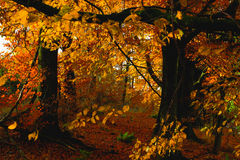 Uma floresta bonita do outono imagem de stock royalty free