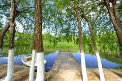 Uma floresta com as árvores na natureza perto do rio e do lago na natureza Foto de Stock