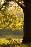 Uma floresta da queda Fotos de Stock Royalty Free
