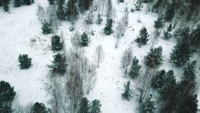 Uma floresta do inverno uma vista geral do zangão do helicóptero filme