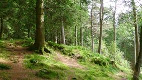 Uma floresta em Noruega Fotos de Stock Royalty Free