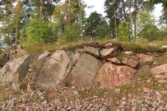 Uma floresta em uma rocha imagens de stock
