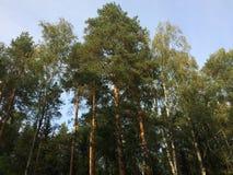 Uma floresta misturada no dia ensolarado do verão, paisagem bonita imagem de stock