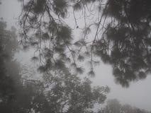 Uma floresta nevoenta Foto de Stock