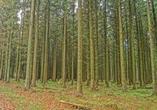 Uma floresta no outono Fotos de Stock Royalty Free