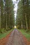 Uma floresta no outono Fotografia de Stock