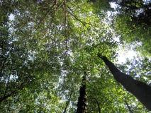 Uma floresta no verão Fotos de Stock