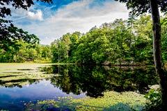Uma floresta refletida em um lago com Lily Pads fotografia de stock royalty free