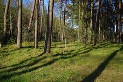 Uma floresta selvagem verde Foto de Stock