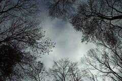 Uma floresta sinistra Imagens de Stock Royalty Free