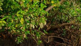 Uma floresta submersa em Brasil imagem de stock