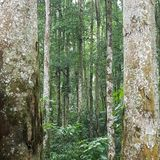 Uma floresta tranquilo em Bali com tanto a beleza a ser capturada sido as árvores a nível do olho fotografia de stock royalty free
