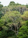 Uma floresta tropical Fotos de Stock Royalty Free