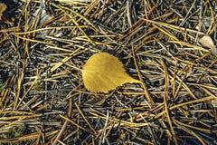 uma folha amarela do outono foto de stock royalty free