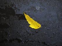 Uma folha amarela dos verdes um no asfalto molhado Imagens de Stock Royalty Free