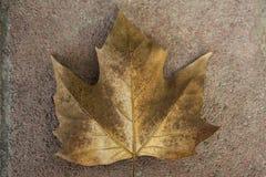 Uma folha amarelada que encontra-se em um trajeto de pedra fotografia de stock royalty free
