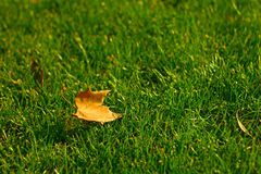 Uma folha caída Foto de Stock