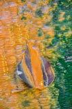 Uma folha da árvore no fundo ferroso da água Fotos de Stock Royalty Free