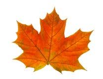 Uma folha de bordo colorida Imagem de Stock Royalty Free