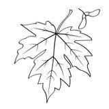 Uma folha de bordo com sementes ilustração stock