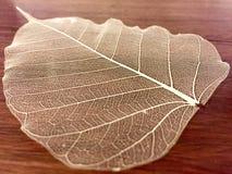 Uma folha de esqueleto decorativa Foto de Stock