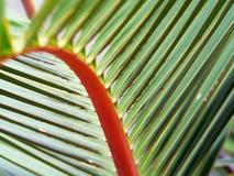 Uma folha de palmeira perfeita para o verão Fotos de Stock