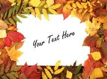 Uma folha de papel branca em um quadro do outono Imagem de Stock