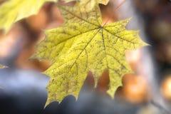 Uma folha do outono foto de stock