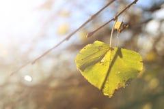 Uma folha do outono na árvore fotografia de stock royalty free