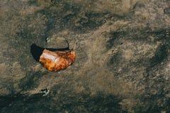 Uma folha do outono que encontra-se em uma pedra imagem de stock