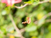 Uma folha em uma Web de aranha selecione o fundo do foco e do borrão Fotos de Stock Royalty Free