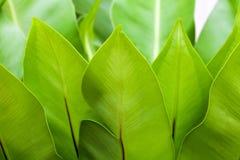Uma folha grande da erva Imagem de Stock