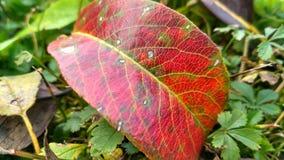 Uma folha na grama fotografia de stock
