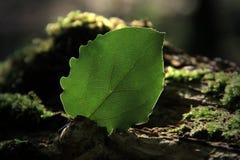 Uma folha na luz solar foto de stock royalty free