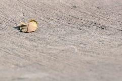 Uma folha no assoalho concreto do cimento Imagens de Stock Royalty Free