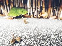 Uma folha pequena cai à cerca Foto de Stock Royalty Free