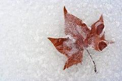 Uma folha, prendida no gelo Fotografia de Stock Royalty Free