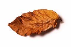 Uma folha seca Fotos de Stock