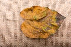 Uma folha seca separada na vista Imagens de Stock
