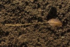 Uma folha seca separada na vista Foto de Stock Royalty Free